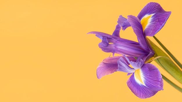 Close-up van een mooie paarse bloem