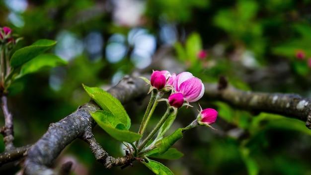 Close-up van een paarse bloem op een tak
