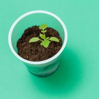 Close-up van een plastic blikje met een jonge tomatenzaailing en aarde