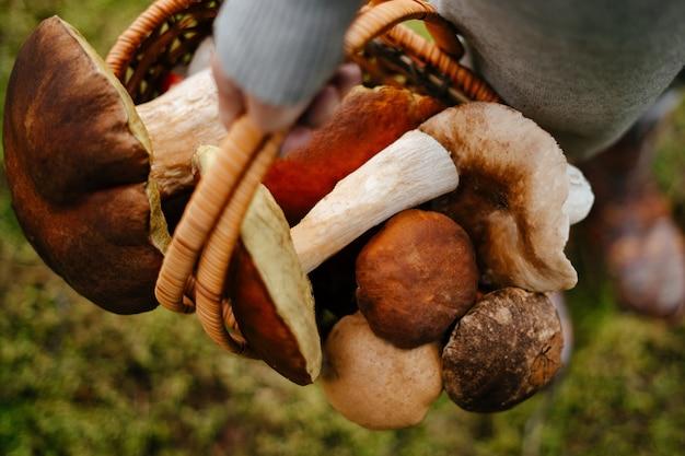 Close-up van een rieten mand met paddestoelen in de handen van een jonge vrouw concept van oogsten