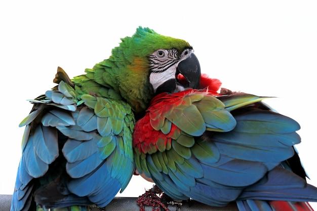 Close-up van een scarlet macaw van zijaanzicht scarlet macaw close-up hoofd