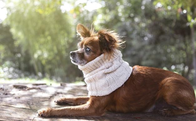 Close-up van een schattig hondje in een gebreide sjaal