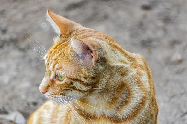 Close-up van een schattige gemberkat onder het zonlicht met een wazige scène