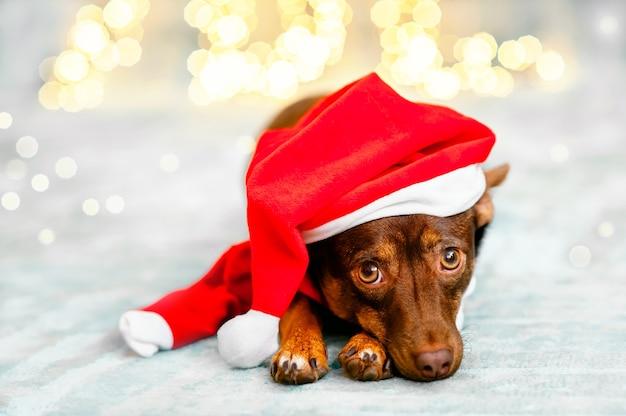 Close-up van een schattige liggende puppy met een kerstmuts