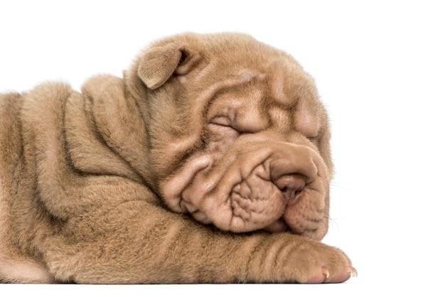 Close-up van een shar pei-puppyslaap op wit wordt geïsoleerd dat