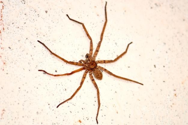 Close-up van een spin in het huis