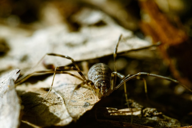 Close-up van een spin