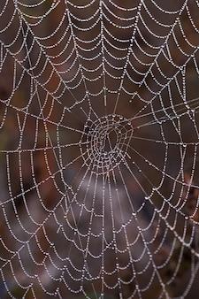 Close-up van een spinnenweb met ochtenddauw