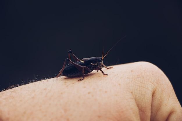 Close-up van een sprinkhaan zittend op iemands hand