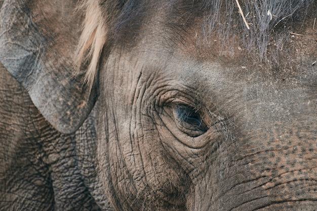 Close-up van een trieste olifant