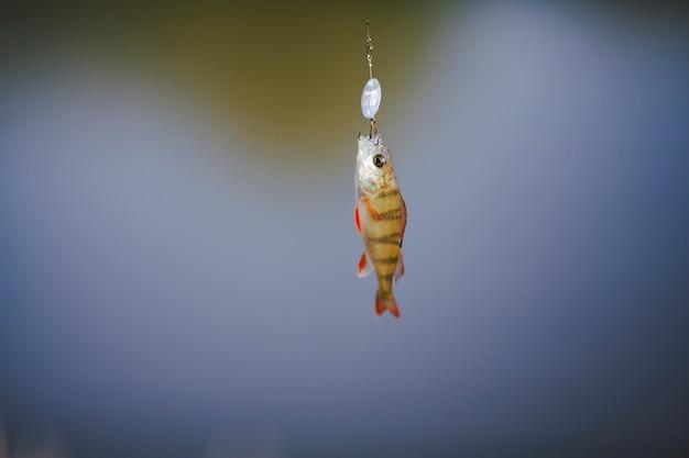 Close-up van een vis die op haak hangt