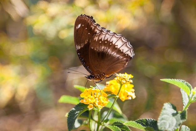 Close-up van een vlinder op een bloem