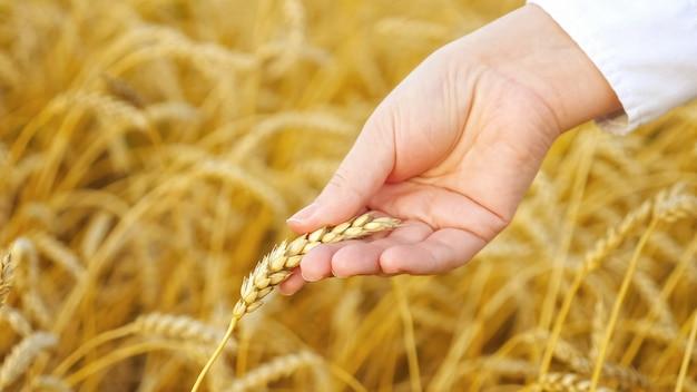Close-up van een vrouwelijke hand met een oor van gele tarwe in een veld.