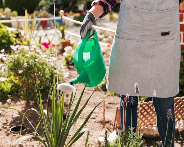 Close-up van een vrouwelijke tuinman die de installatie in de tuin water geeft