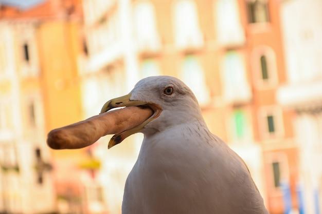 Close-up van een zeemeeuw houdt brood in zijn mond. gebouwen verlicht op heldere achtergrond