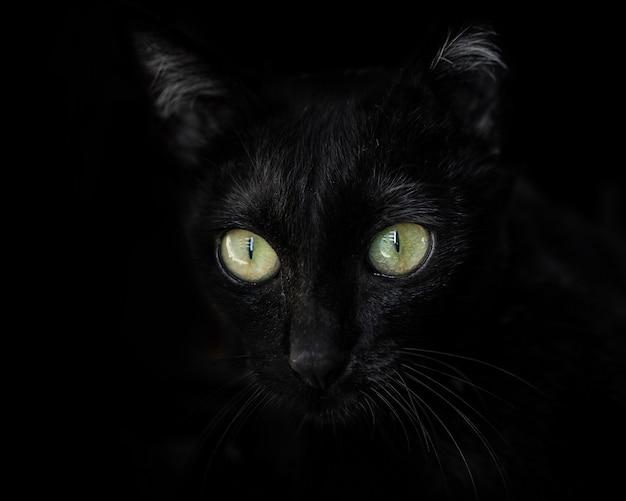 Close-up van een zwarte kat