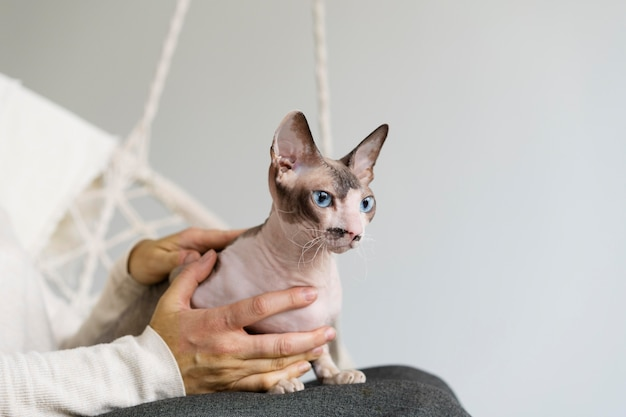 Close-up van eigenaar die haarloze kat vasthoudt