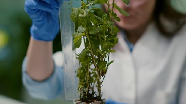 Close-up van farmaceutische arts maatregel groene jonge boom analyseren ggo analyzing