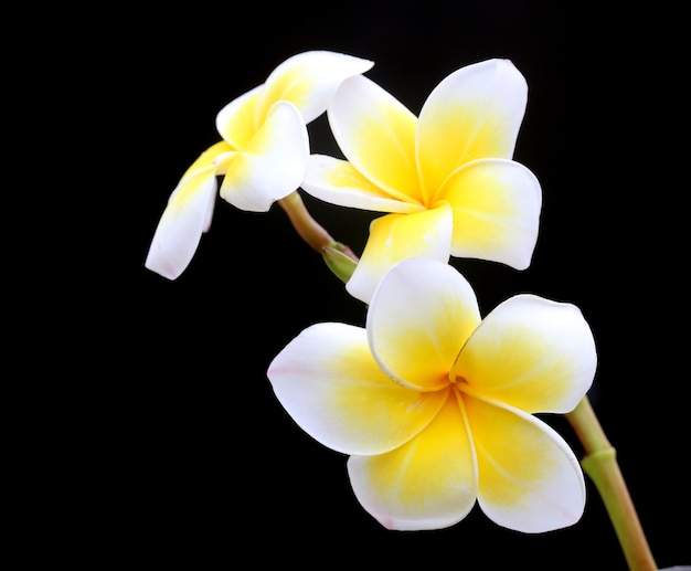Close-up van frangipani 's nachts