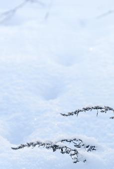 Close-up van gedroogd kruid plant onkruid bedekt met sneeuw in de winter besneeuwde leeg veld op wit blauw buiten lege ruimte achtergrond. verticale opname
