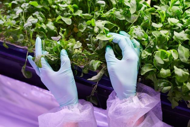 Close-up van gehandschoende vrouwelijke handen zachtjes aanraken van jonge groene planten tijdens het onderzoek van spruiten in kwekerij kas, kopieer ruimte