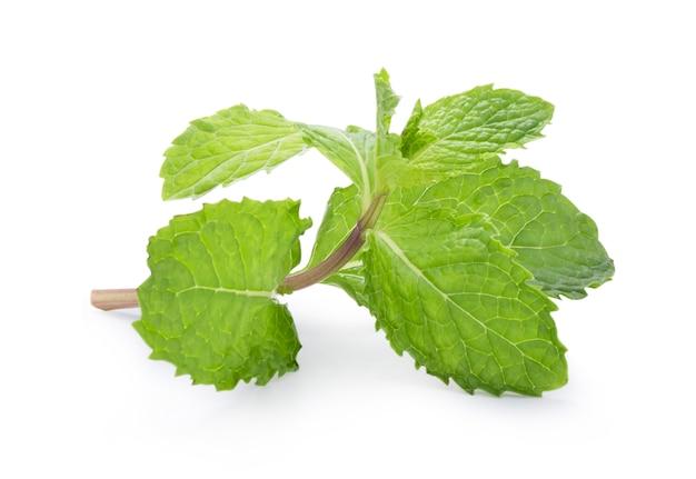 Close-up van geïsoleerde verse groene muntbladeren op witte achtergrond. groene munt of pepermunt is een kruid dat wordt gebruikt voor het op smaak brengen van ijs, snoep, fruit, conserven, alcoholische dranken, kauwgom en tandpasta.