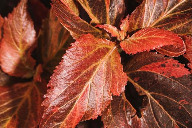 Close-up van gekleurde vegetatiebladeren