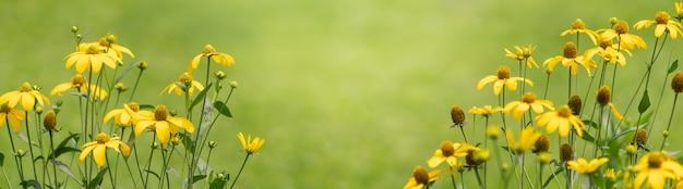 Close-up van gele bloem op vage aardachtergrond.