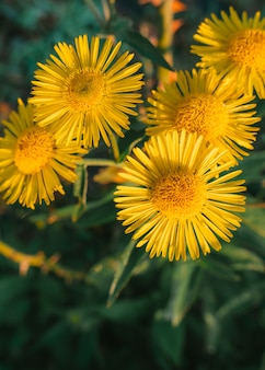 Close-up van gele bloemen in tuin