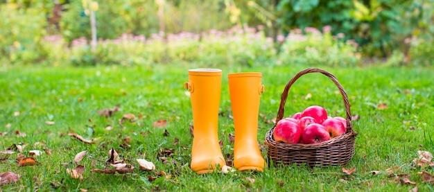 Close-up van gele rubberlaarzen en mand met rode appelen in de tuin