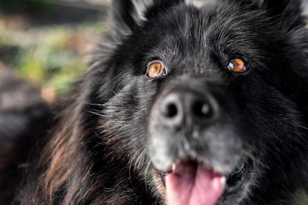 Close-up van gelukkige hond buitenshuis Gratis Foto