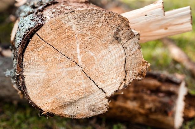 Close up van gesneden boomstam. ontbost gebied in een bos met gekapte bomen in tatra, polen.