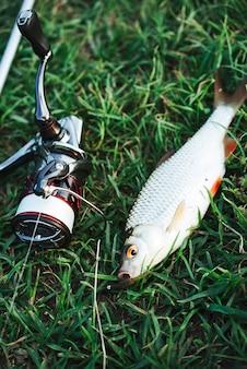 Close-up van gevangen vis en hengelhaspel op groen gras