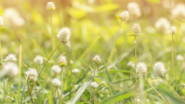 Close-up van groen blad op vage achtergrond in tuin als achtergrond, vers behangconcept.