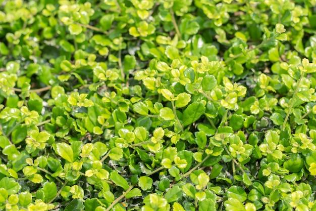 Close-up van groen blad op vage achtergrond in tuin