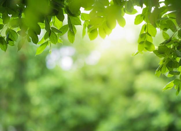 Close-up van groen blad op wazig groen en zonlicht in de tuin voor natuurlijke groene plant