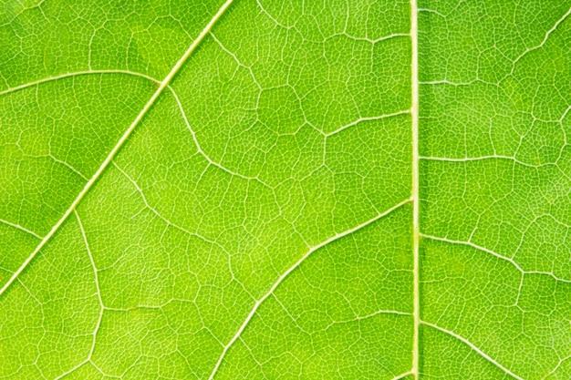 Close-up van groen blad. textuur of achtergrond
