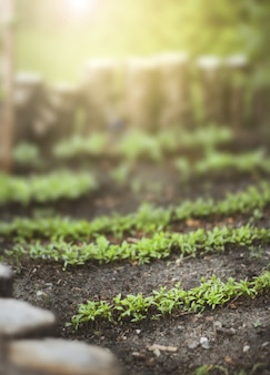 Close-up van groen in een tuin met zonlicht hierboven op een zonnige dag