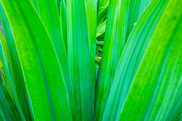 Close-up van groene bladeren, natuurlijke achtergrond