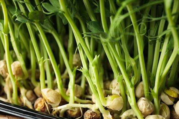 Close-up van groene erwtenspruiten