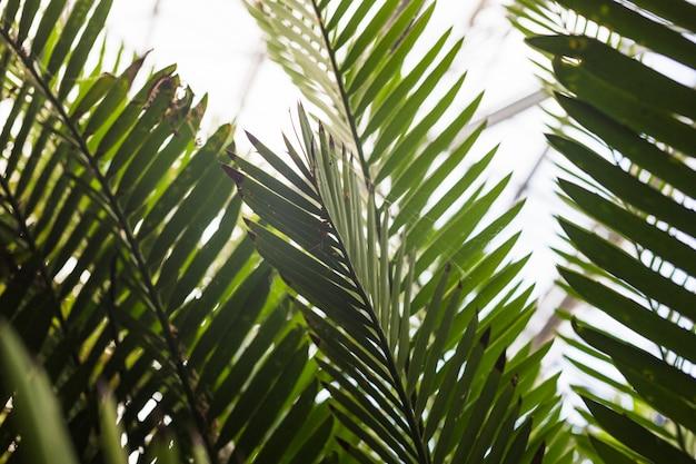 Close-up van groene palmbladen