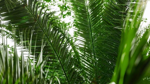 Close-up van groene palmboombladeren