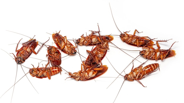 Close-up van groep dode kakkerlak thailand op witte achtergrond