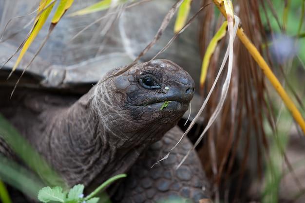 Close up van grote schildpad op het strand