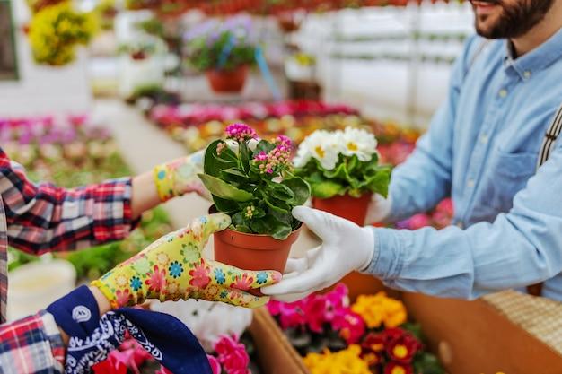 Close-up van handen passerende bloemen. ondernemers die bloemen verzorgen