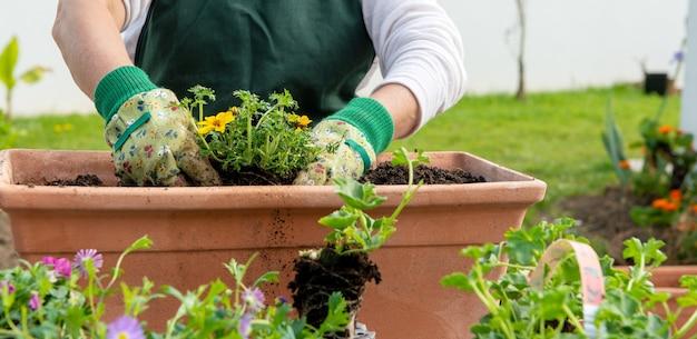 Close up van handen van vrouw bloemen oppotten