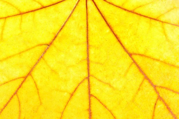 Close-up van herfst geel esdoornblad. gebruik voor achtergrond