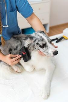 Close-up van het de hand verzorgende haar van een vrouwelijke dierenarts met gelikter borstel