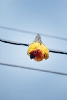 Close-up van het gezicht van de papegaai die aan de elektrische draad hangt