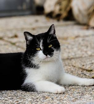 Close-up van het gezicht van een mooie kat met de gele look en de ene helft in het zwart en de andere in het wit.